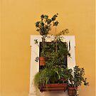 Rome Window Box by Fara