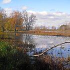 Petrie Island, Ottawa, ON by Shulie1