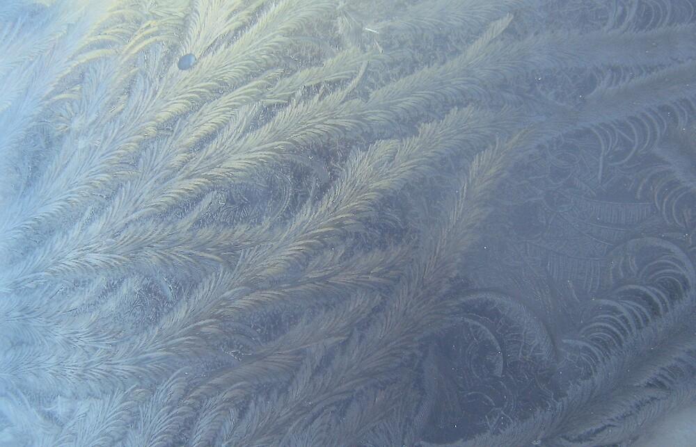 frost on the windscreen by Debra Goldsmith