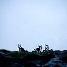 Wolves by AquaMarina