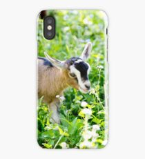 Young Beige Goat Kid in Meadow iPhone Case/Skin
