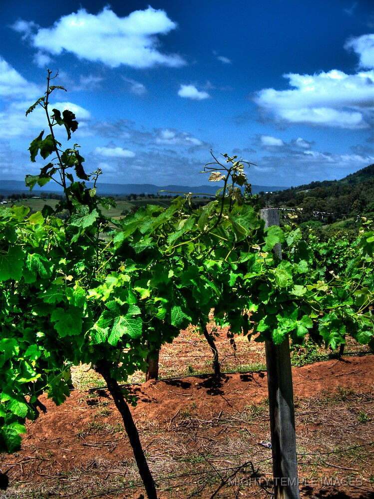 Through the grapevines by MIGHTY TEMPLE IMAGES