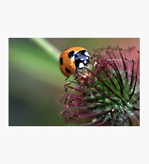 Spikey Nectar Photographic Print