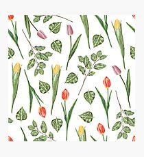 Tulips garden Photographic Print