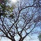 Sunlight Peeping Through by Margaret Stevens