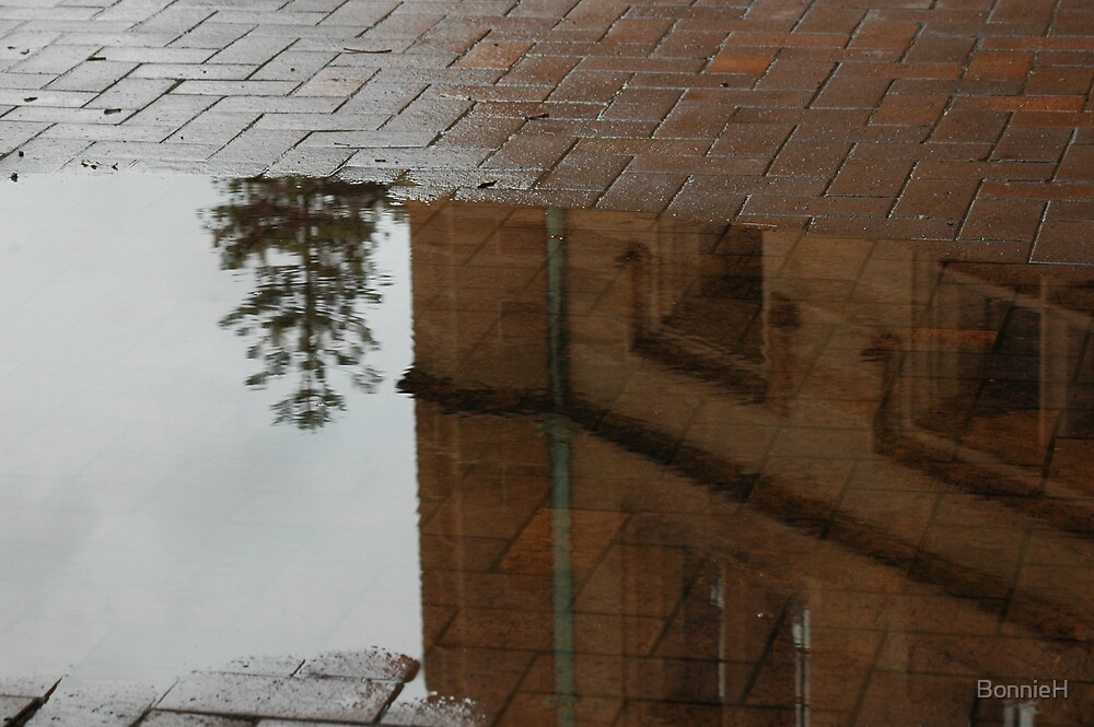 Puddle reflection in Sydney by BonnieH