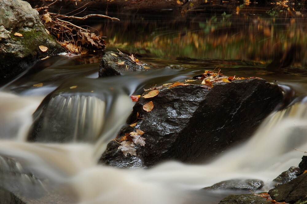 Fall Stream by Ronald Smith