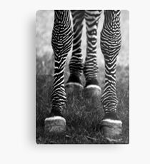 Zeb Legs Metal Print
