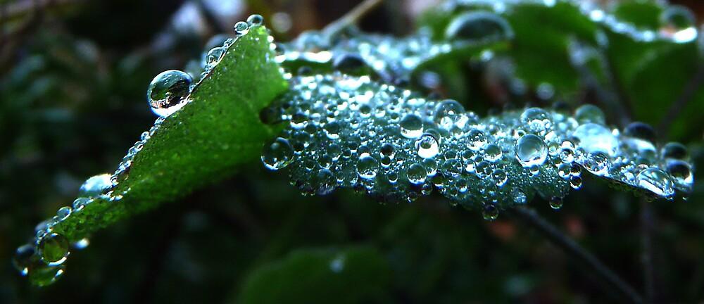 Morning dew  by satterflOw