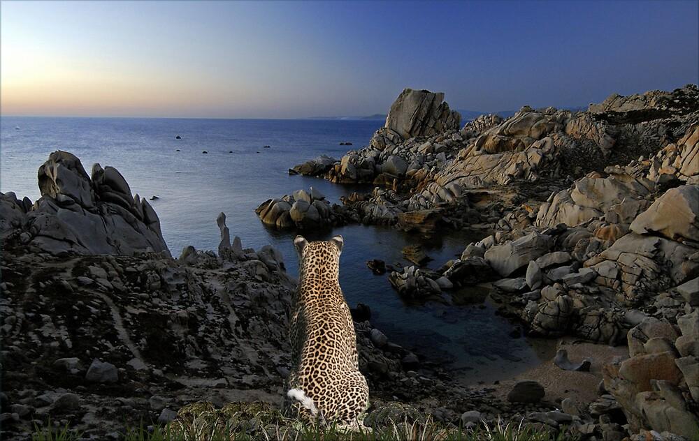 1031-Leopard Coast Dusk by George W Banks