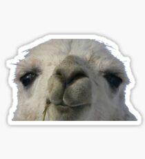 llama llama Sticker