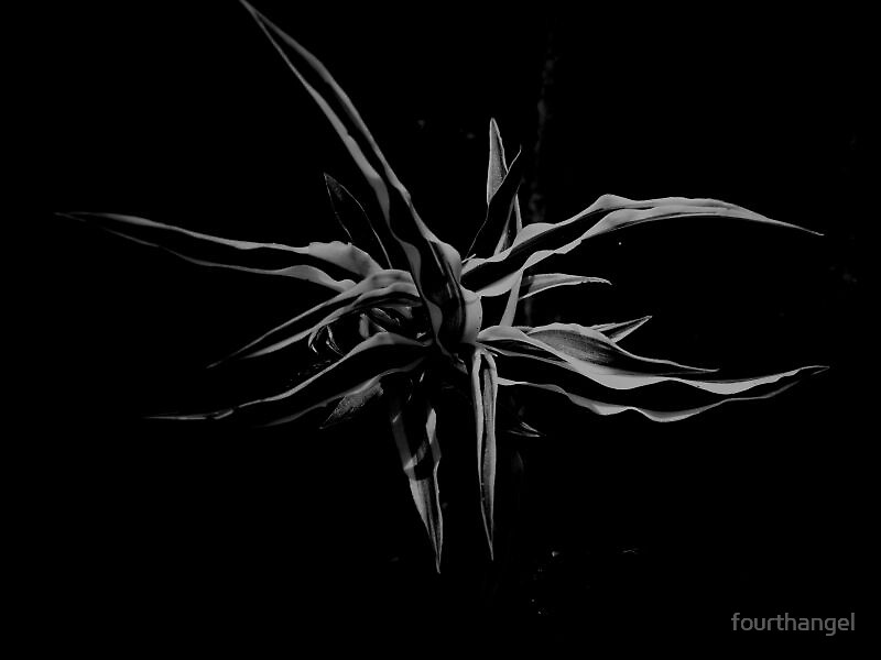 Entrapment by fourthangel