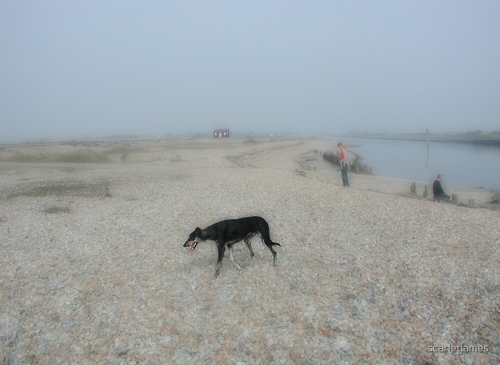 Dog on Shingle by scarletjames