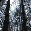 Westcoast snow by RobertCharles