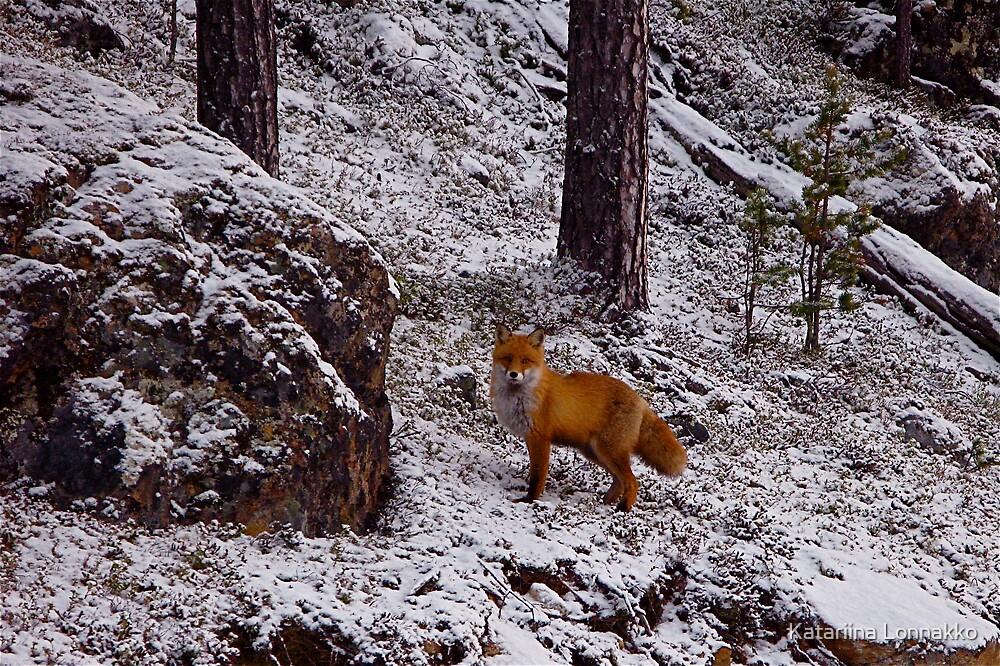Fox by Katariina Lonnakko