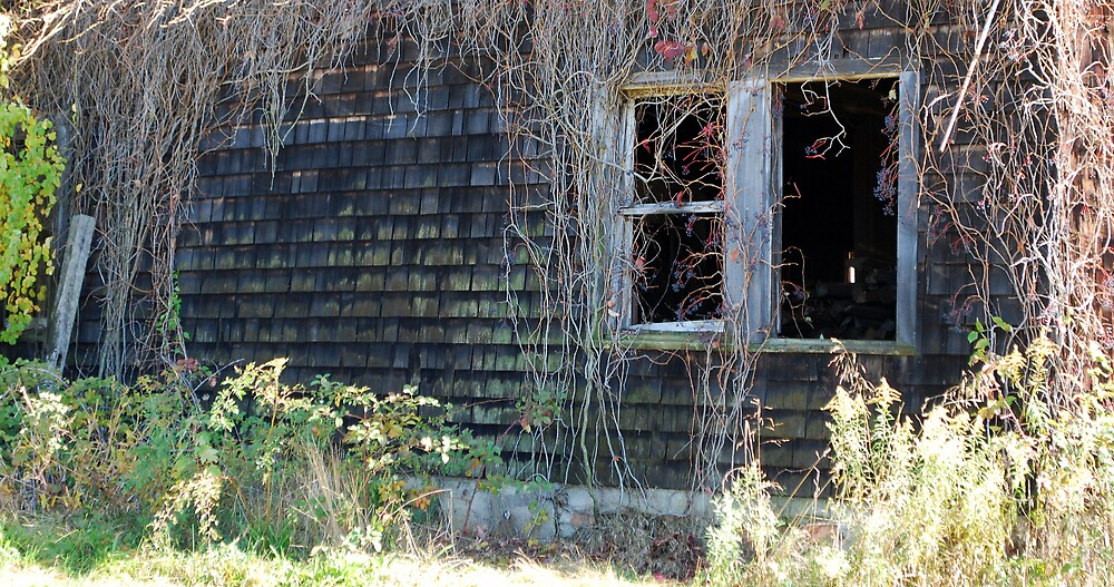 old rotted barn by deegarra