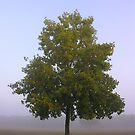 Tree by LizzieMorrison