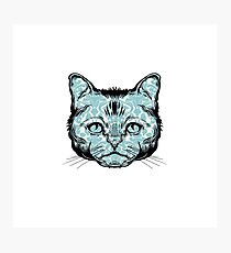 Icono Cat with blue pattern Photographic Print