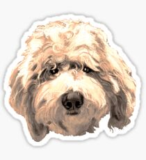 Lucky Labradoodle Face ~ Golden Sticker