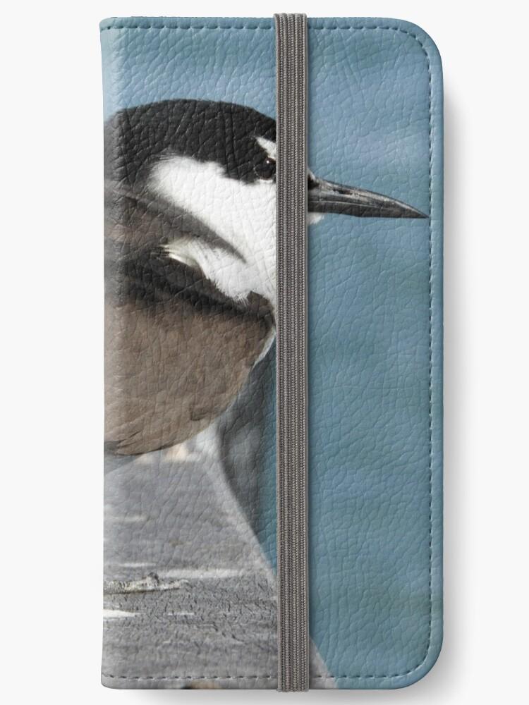 Bridled Tern (Onychoprion anaethetus) - Penguin Island, Western Australia by Dan Monceaux