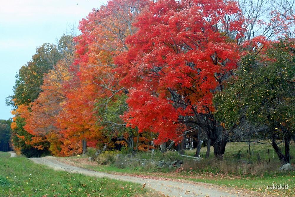 autumn road by rakiddd