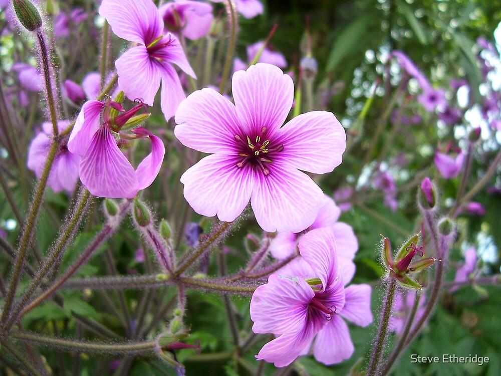Flower by Steve Etheridge