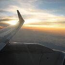 plane wings by jobe