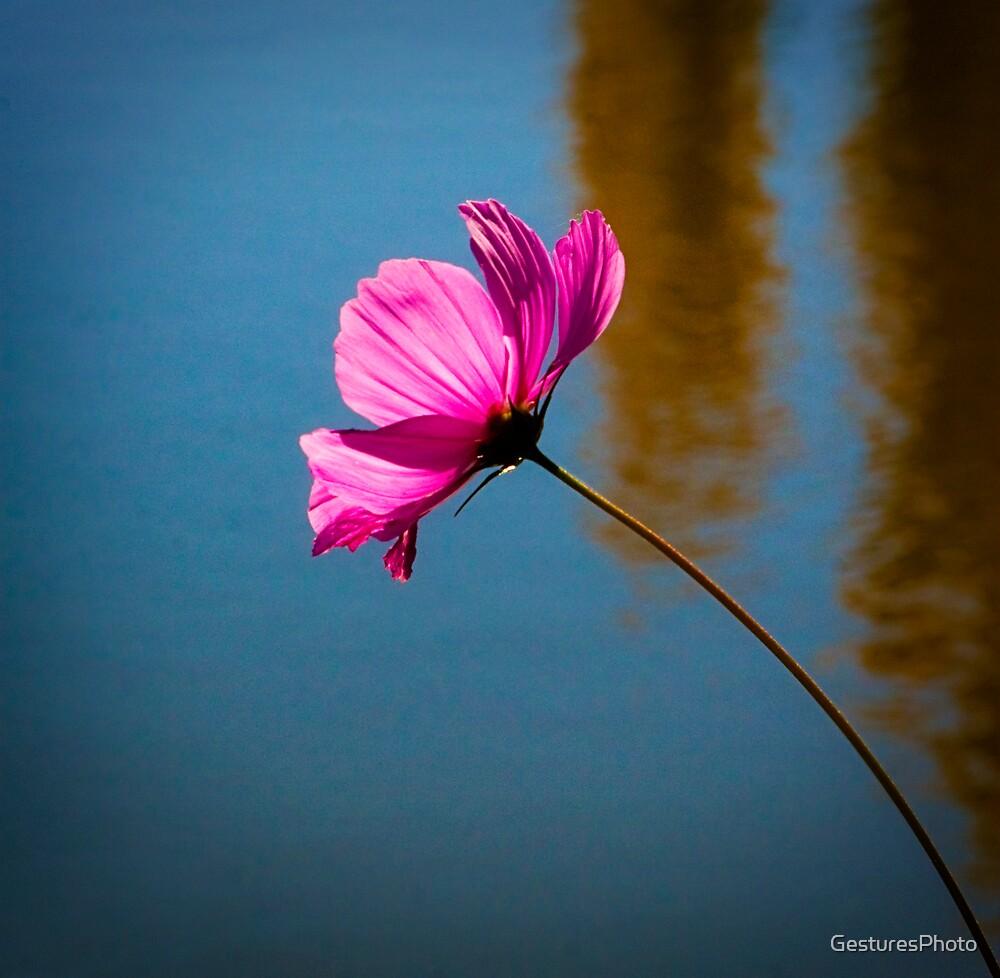 One Pink Stem by GesturesPhoto