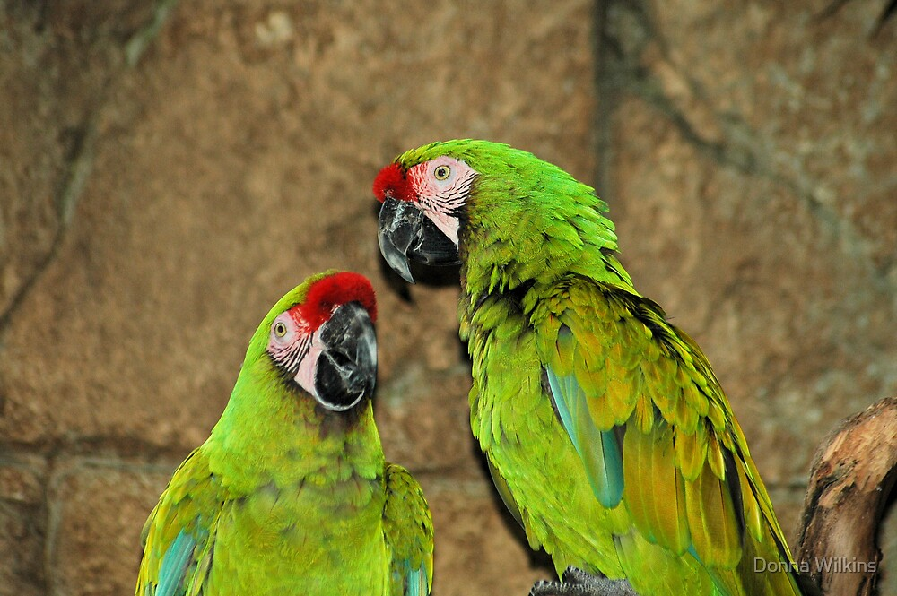 Red-crowned Amazon by Donna Adamski