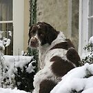 Dog in the Snow by Flo Smith
