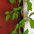 Clinging Vine by CarolM