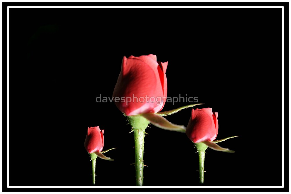 Red Roses With Frame by davesphotographics