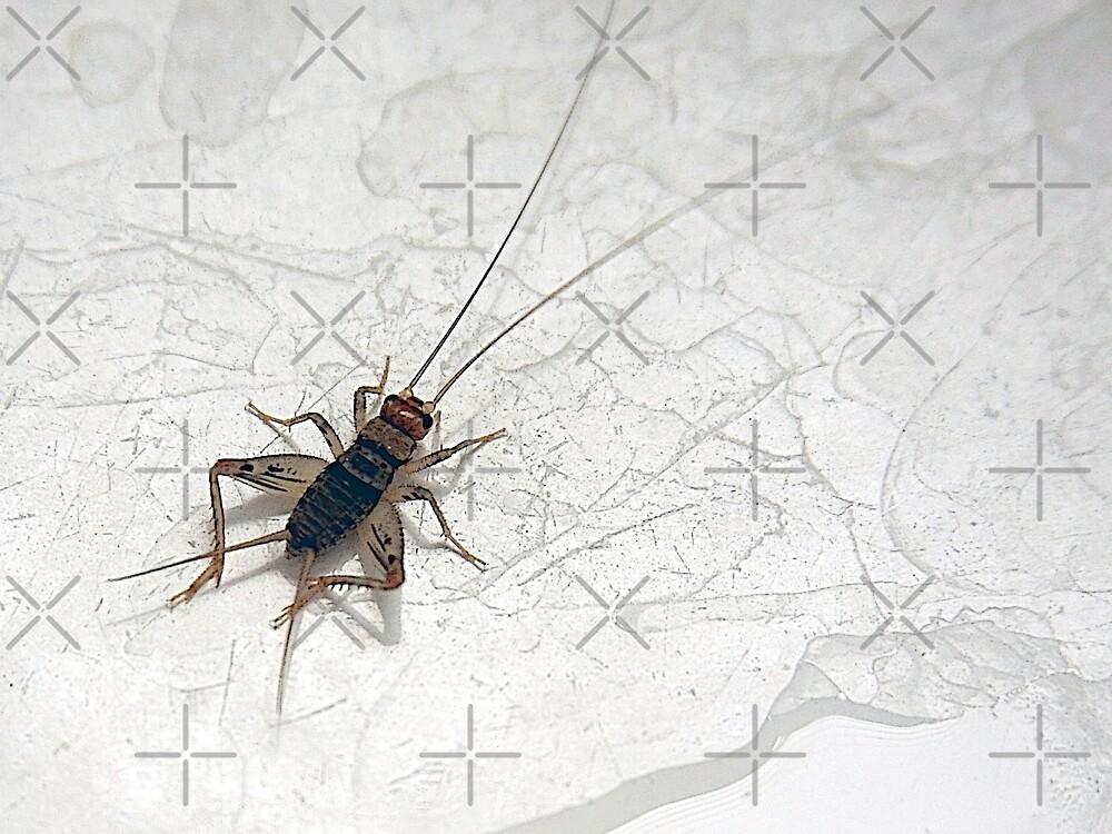Sink Cricket by CarolM