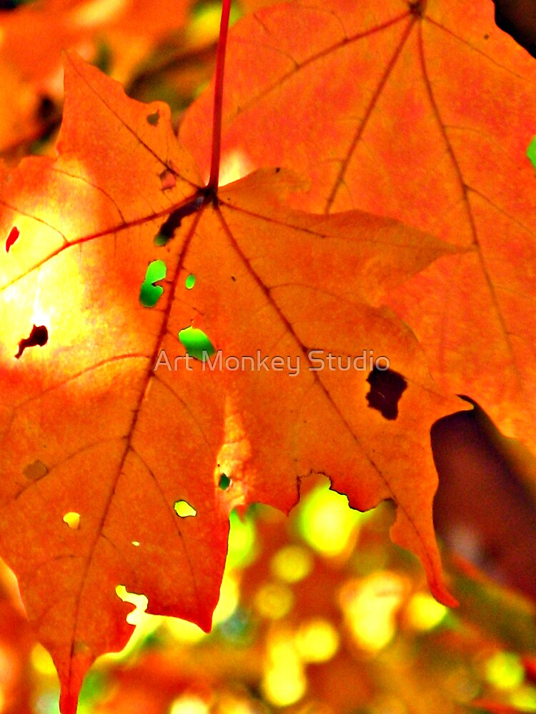 Sun Through the Leaves by Dan Perez