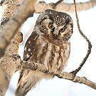 O1_september owl by Marty Samis