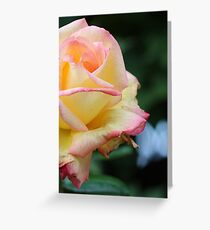 Flower Collection 2 Greeting Card