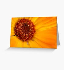 Flower Collection 4 Greeting Card