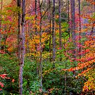 Red River Gorge by LizzieMorrison