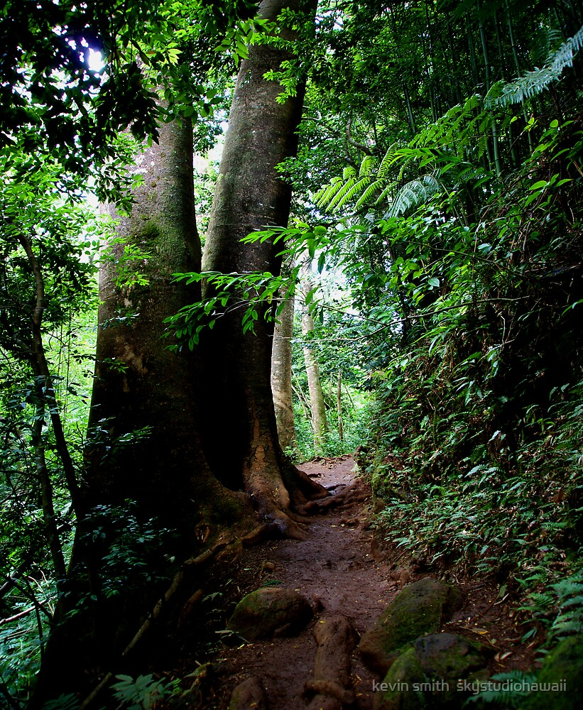 Manoa Valley Trail by kevin smith  skystudiohawaii