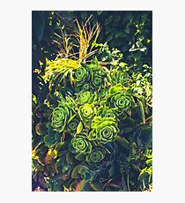 Succulent Plant Flourishing in the Tropics  Photographic Print