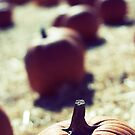 Fading Pumpkins by brightfizz