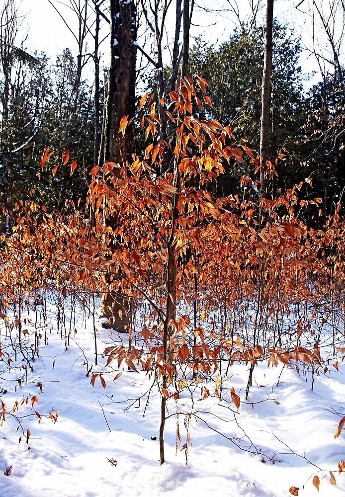 Beech Trees In Winter by Debbie Oppermann
