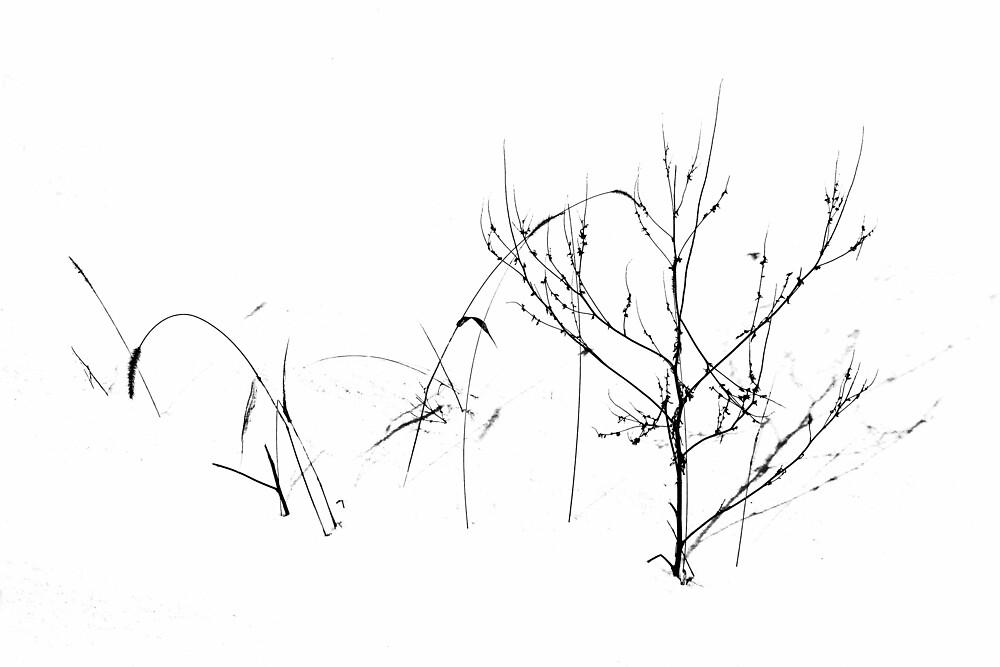 Winter's Garden by Debbie Oppermann