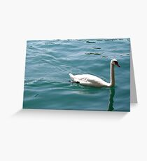 Swan on Lake Zurich Greeting Card