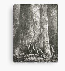 Big Ben, Giant tree, Victoria, Australia Canvas Print