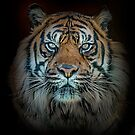Tiger, Tiger Burning Bright by Brian Tarr
