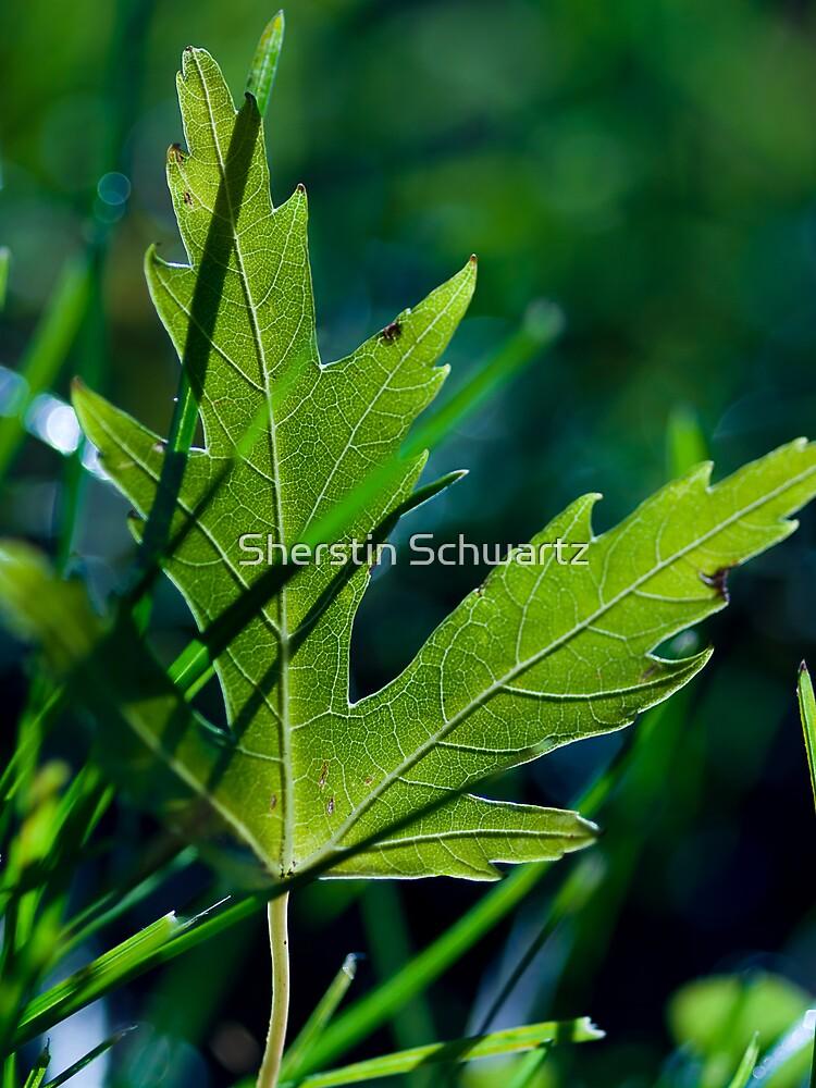 Chill of Autumn.  by Sherstin Schwartz