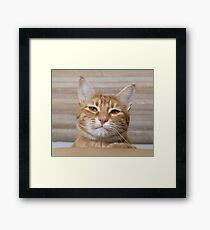 What are ya lookin' at?  Framed Print