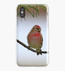 Lesser Red Poll - Carduelis Cabaret iPhone Case/Skin