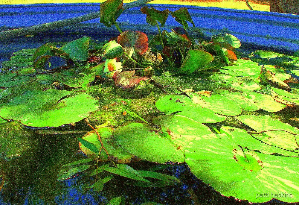 Stock Pond with water lily's by patti haskins